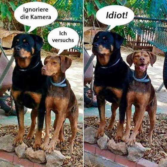 dog blog idiot
